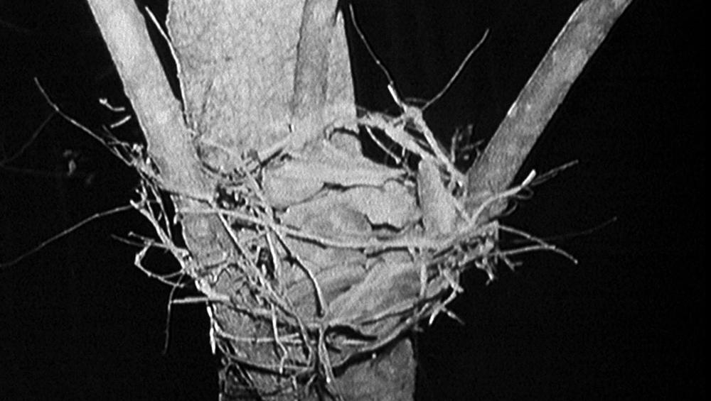 Scena tratta da The Blair Witch Project